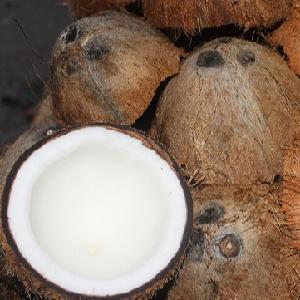 The Fried Coconut with BEST Price in VietNam