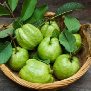 The Fresh Guava with LOWEST Price in VietNam