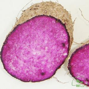 The Fresh  Jam (Purple Flesh) with BEST Price in VietNam