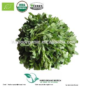 Organic alfalfa grass powder / alfalfa extract powder