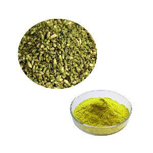 Hongda Factory Supply Natural Sophora Flower Bud Extract Rutin Powder Rutin Extract