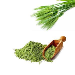 HONGDA Supply organic buy barley  green   leaves  grass juice extract powder in bulk barley grass powder