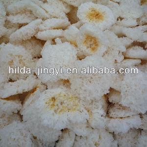 Snow white fungus