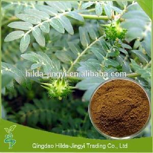 100% pure saponins tribulus terrestris L extract