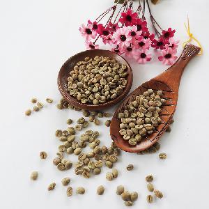 Yunnan green coffee beans Arabica coffee bean for sale