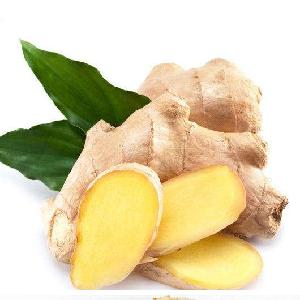 Hot Sale New Crop Chinese Large Size Fresh Air Dry Ginger