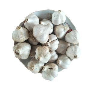 For Sale Chinese Fresh Garlic in Bulk Pure White Garlic