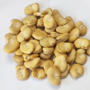 Bulk Peeled Broad Beans In Qinghai Fave Beans For Sale