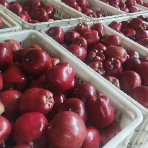 Chinese Sweet Taste Fresh Delicious Red huaniu apples wholesale
