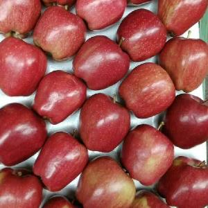 New Crop Fresh  Apple  Fruits  Huaniu   Apple  with Cheap Price