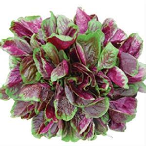 Chinese Hybrid Vegetable Seeds red Amaranth Seeds
