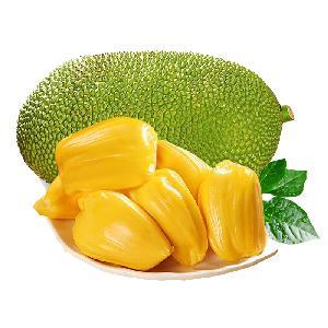 Factory Supply Red and Yellow Flesh Jackfruit Jack Tree Artocarpus Heterophyllus Seeds for Planting and Grafting