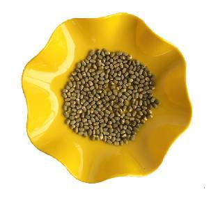 Factory Supply Export Quality Standard Freeze Dried Mung Bean/Vigna Radiata/Green Gram