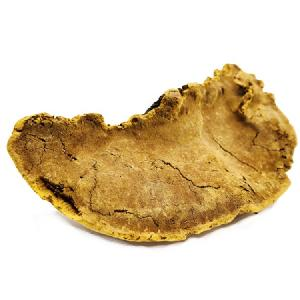 Chinese herb Dried Phellinus linteus mushroom for anti cancer