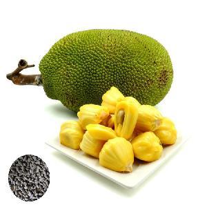 High Yield artocarpus heterophyllus seeds/Jackfruit fruit Seeds/Panasa seeds on sales