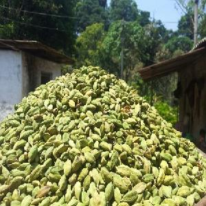 Grade A High Quality Fresh Green Cardamom/Dried Cardamom for export to Saudi Arabia, India, UK