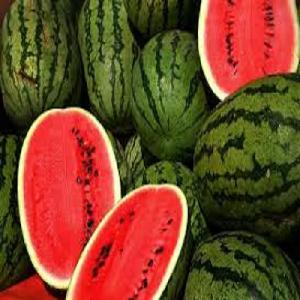 Sweet   watermelon  Fruit with best price  From Thailand