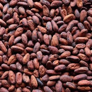 Naturally dried Cocoa beans for sale