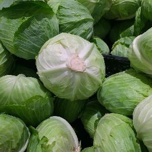 Fresh green cabbage from new crop of 2018 export standard