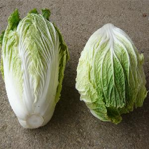 Chinese fresh flat cabbage from Thailand