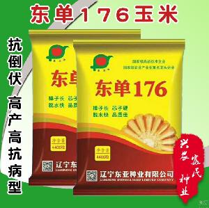 Touchhealthy supply  hybrid  f1 fodder  corn   seed s/maize  seed s 4400  seed s/bags