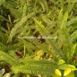 2018 Good quality ciliate desert-grass used as lawn or turf grass seeds