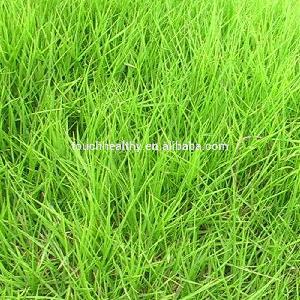 Good quality Zoysia japonica seeds used as turf grass seeds