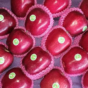China Fresh red delicious fruit  huaniu apple
