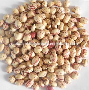 Iran market  round   Light   Speckled   Kidney   Bean s LSKB