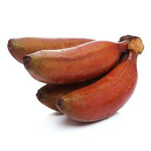 Tissue Culture  red  Banana tree seedlings, Musa nana Lour.