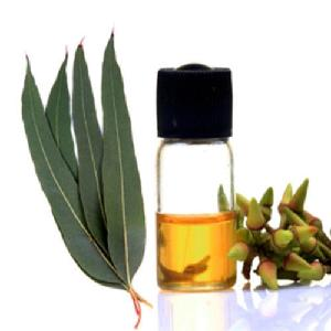 Eucalyptus  Oil Bulk from Asia Best Price high quality for flavoring and perfumery