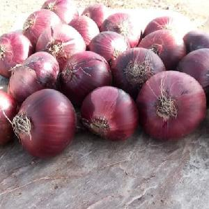 red onion 5-7CM Egypt supplier fresh red onion importers