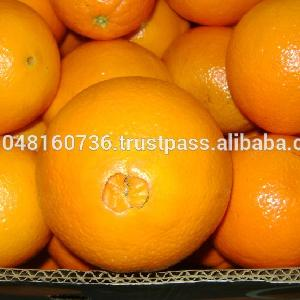 Citrus  Fruit  Product Type and Fresh Style  Navel Orange, competitive prices