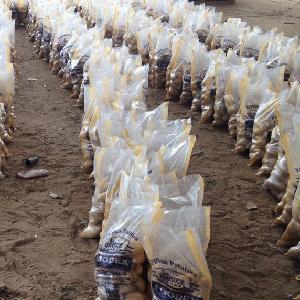 wholesale fresh potato price to Malaysia/ Dubai