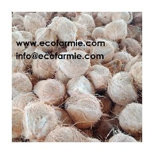 Semi  Husked   Coconuts / Full  husked  dried whole coconut