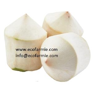Best Price Fresh  Coconut s/  Supply  Sweet  Coconut