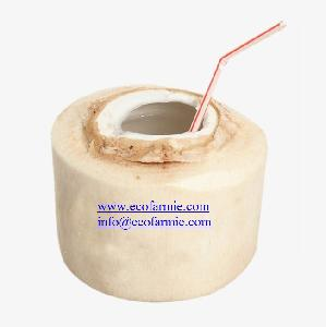 Good Price Coconuts/ 100% Pure Young  Coconut