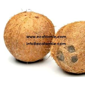 FRESH MATURE COCONUTS/ SEMI HUSKED COCONUT FROM VIETNAM