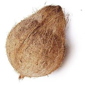 Wholesale fresh dry mature coconuts/ Semi husked dried coconut