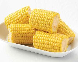 supply BRC certified IQF frozen sweet corn kernels cob cut whole good quality hot sale