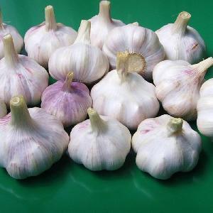 DSF China Best Fresh Natural Garlic Price - New crop Hot sales