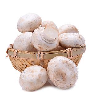 IQF  Frozen Champignon /  White  Button mushroom