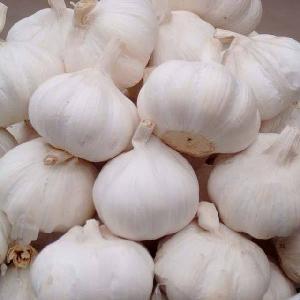 New Crop Garlic Chinese fresh garlic price
