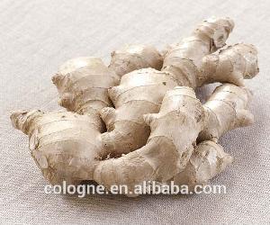 Fresh ginger in mesh bag / Bulk high quality fresh ginger export dubai by lowest price