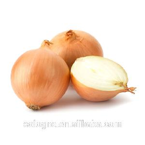 2019 New crop onion for export Chinese /yellow onion