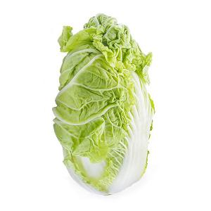 Napa Cabbage for export