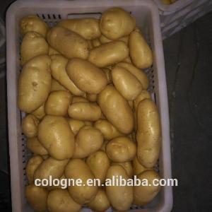 Fresh Potatoes Holland Type