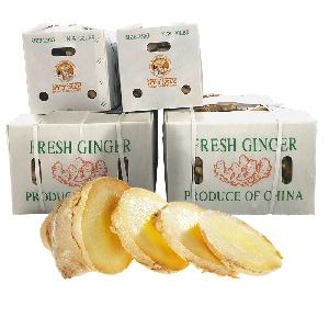 Mature fresh Air  dry chinese specification Ginger Export to USA market  price