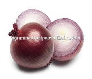 Round Red big onion from india