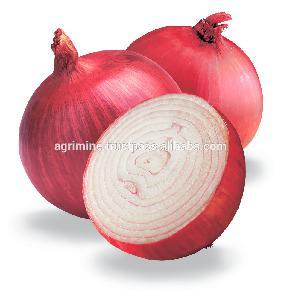 Fresh red  big   onion  in bulk